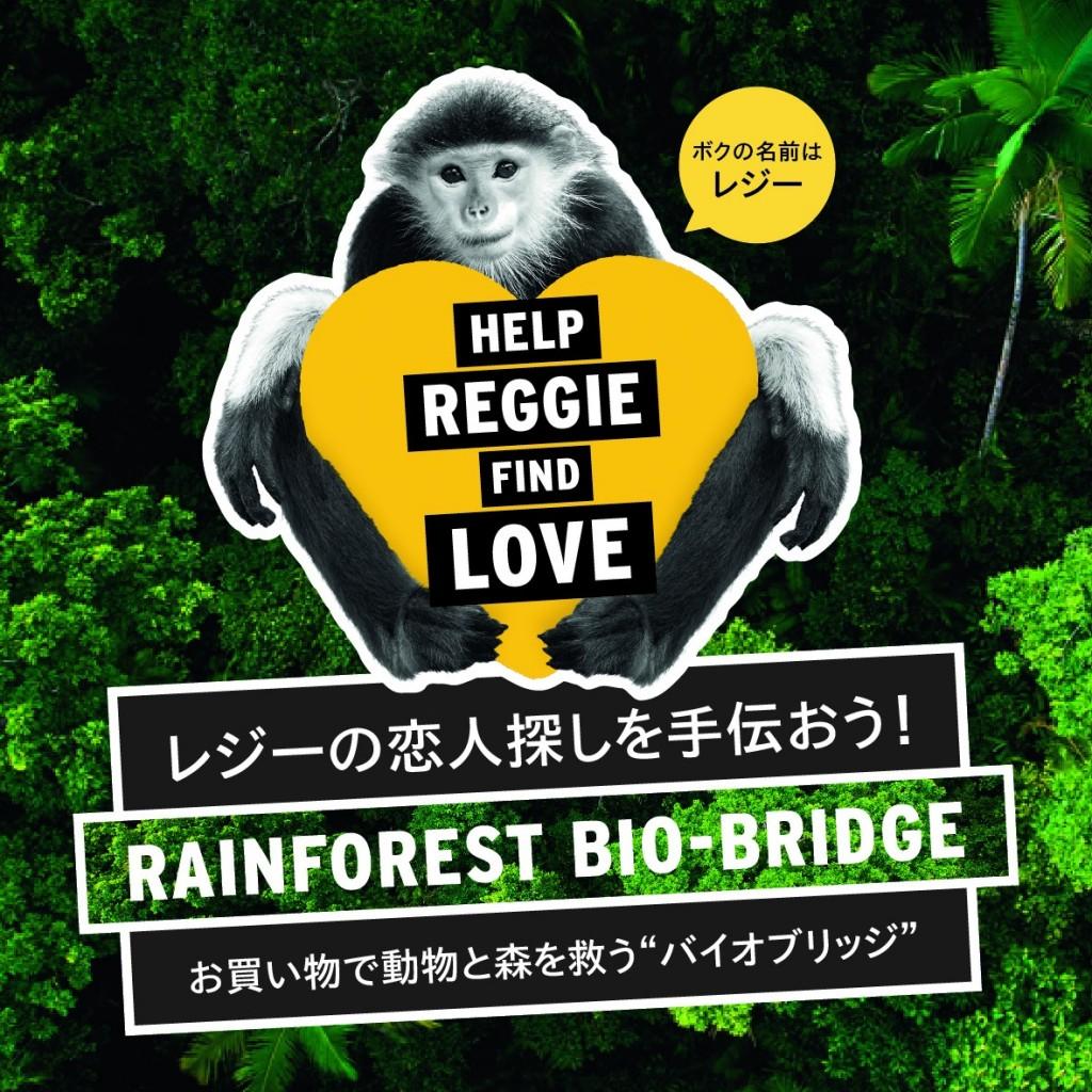 reggie-01(1)