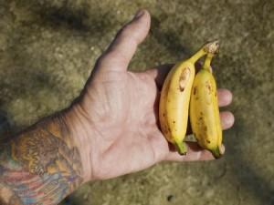 バナナがインドの女性を救う。「土に還る生理用ナプキン」とは?