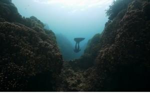2作目:「沖縄に生息するジュゴンを守りたい」。環境問題を切り口に「辺野古新基地問題」を考える映画が公開 |GOOD CINEMA PICKS