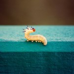 地球に優しい小さなヒーロー!?「プラスチック」が主食の虫。