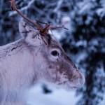気温プラス20度。去年のクリスマスに起きた「北極の悲劇」