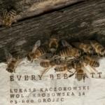 """蜂が働かなければ、人類は存続できない。""""過労死する蜂""""を元気づけて、人を救う""""エナジーペーパー""""とは"""