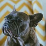 大好きな曲は、愛犬と。音楽配信世界最大手Spotifyが始めた「子犬の里親探しプロジェクト」とは